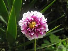 Pictures Of Beautiful Flowers In The World - beautiful flowers beautiful flowers names nature in garden