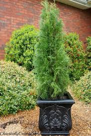 best 25 front porch plants ideas on porch plants