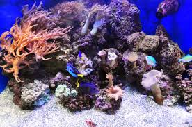 what makes a saltwater aquarium a reef tank
