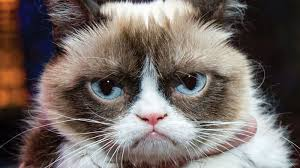 Create A Grumpy Cat Meme - grumpy cat know your meme