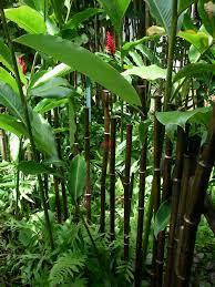 live bamboo fence china how to grow a live bamboo fence u2013 design
