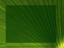 palm fronds for palm sunday palm fronds church slides screens for the celebration wow