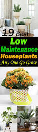 Plants Indoors by Low Maintenance Houseplants Easy Care House Plants Indoor