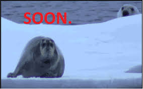 Polar Bear Meme - soon polar bear and seal dump a day