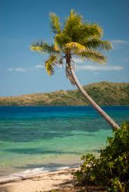 free stock photo of palm tree on an idyllic tropical beach