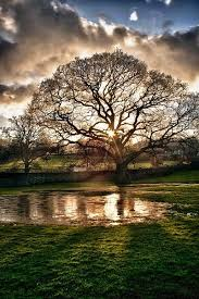 109 best trees images on beautiful forests and plants