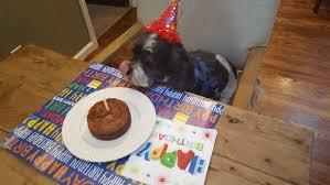 Birthday Cake Dog Meme - birthday cake dog birthday cake meat recipe also dog birthday cake
