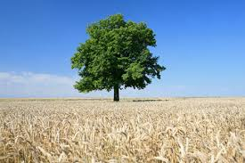 the european tree of the year protected trees in the
