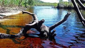 panoramio photo of tea tree lake
