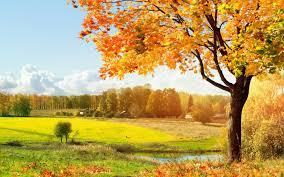 beautiful trees wallpaper 1440x900 29426