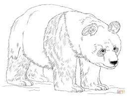 koala bear coloring page giant panda bear coloring page free printable coloring pages