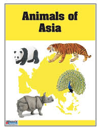 montessori materials animals of asia nomenclature cards printed
