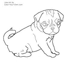 pug puppy coloring