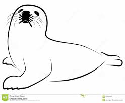baby seal coloring pages baby harp seal coloring pages free