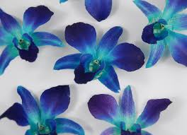 blue orchids for sale preserved orchids blue box of 30 josies wedding 3