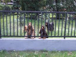 Landscaping Ideas For Backyard With Dogs by Backyard Fencing Ideas For Dogs Backyard Decorations By Bodog
