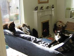 Lincolnshire Trust For Cats A Retirement Home For Felines Who - Retirement home furniture