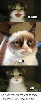 No Meme Cat - no hahaha nop troll tog join animal memes awww hateyou grumpycat