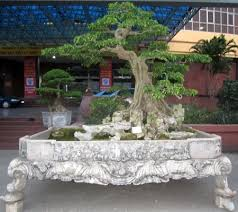the most expensive bonsai trees at the exhibition bonsai