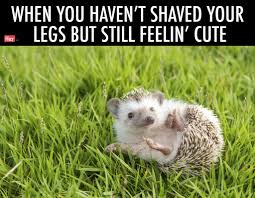 Hedgehog Meme - we turned stunning wildlife photography into relatable memes for
