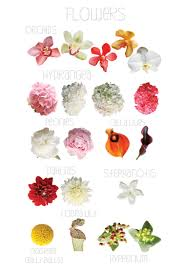 wedding flowers types september flower chart flowers flower chart