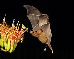 10 reasons you should love bats the national wildlife federation