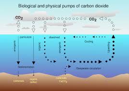 biological pump wikipedia