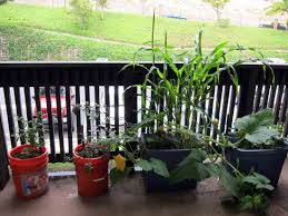 Vegetable Pot Garden by Container Gardening Best Container Garden Ideas And Tips