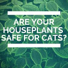safe houseplants for cat owners those cat people
