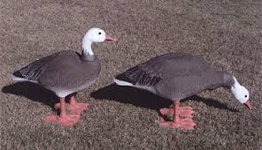 prairiewind decoys single bigfoot blue goose decoy lawn ornament