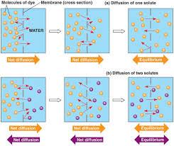 osmosis u0026 diffusion g04bio
