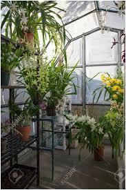 backyards mesmerizing silver polycarbonate greenhouse 50