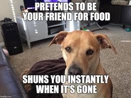 Guilt Meme - dog guilt trip imgflip