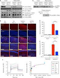 nec u20101 alleviates cognitive impairment with reduction of aβ and tau