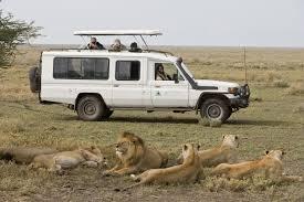 safari cheesemans u0027 ecology safaris worldwide wildlife u0026 nature tours