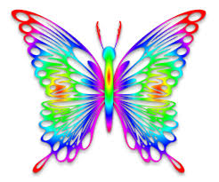 rainbow butterflies pictures archives butterfly species and breeds