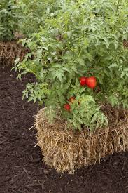 straw bale gardening instructions gardening raised beds