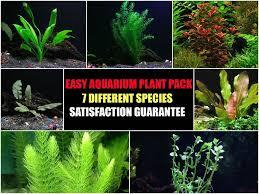 easy live aquarium plants package u2013 7 kinds u2013 anacharis amazon