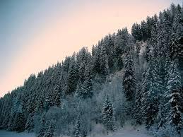 the alpine trees photo