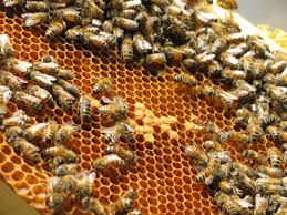 federal programs can help beekeepers build habitat create