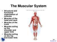 Human Physiology And Anatomy Pdf Muscular System Review Physiology And Anatomy Quiz