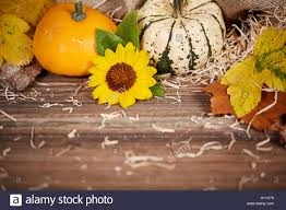 thanksgiving background with pumpkins leaves and sunflower on a