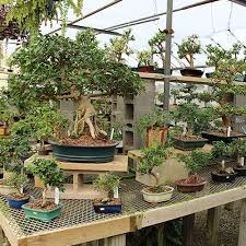 the flower market is michigan u0027s largest bonsai nursery the
