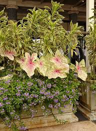 use tropical shade plants in your garden costa farms