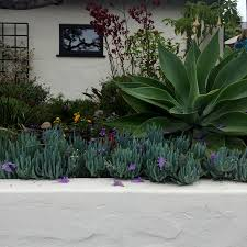 Urban Gardener Newport Beach Laguna Beach Gate U0026 Garden Tour Oc Exclusives Blog