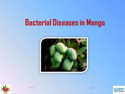 Types Of Bacterial Diseases In Plants - cultural practices and resistance varieties in banana next