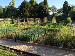 Garden Allotment Ideas Garden Allotment Designs Awesome The Pig Bath Kitchen Garden