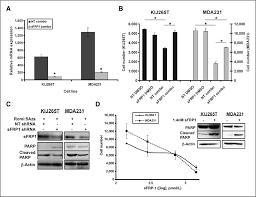 reexpression of tumor suppressor sfrp1 leads to antitumor