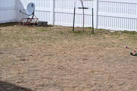 dogs best dog friendly yard images on pinterest backyard best