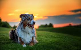 dog wallpapers dogs wallpapers full hd 1080p best hd dogs wallpapers gg yan